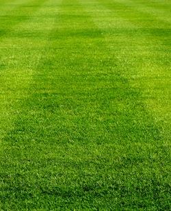 lawn care 5